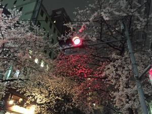 20160401_sakurakayaba